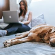 Newsletter, Pets & renting